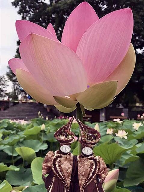 lotus machine Balmer