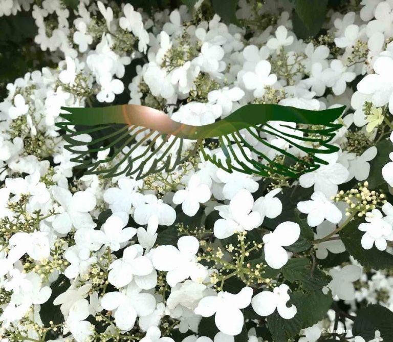 ailes emeraude fantasy
